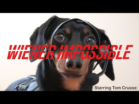 Wiener Impossible with Crusoe the Dachshund