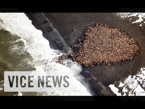 VICE News Daily%3A Beyond The Headlines - October 3%2C 2014