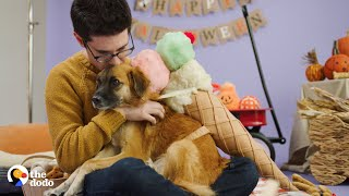 This Rescue is Celebrating Halloween in the Cutest, Easiest Dog Costume | The Dodo by The Dodo