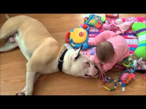 """La relación entre un bebé y un perro de los que denominan """"peligrosos"""""""
