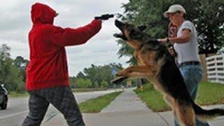 Loyal Dogs Saved People Life Compilation 2017