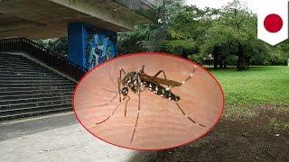 デング熱 新たに感染者2人。感染源は代々木公園か(ニュース)