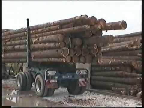 Iveco Turbostar Holztransporter