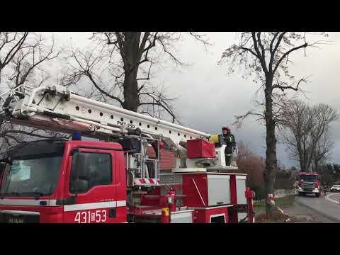 Wideo1: Wycinka drzewa na drodze 324 we Wronińcu