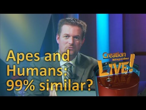 Apes and Humans: 99% similar? — Creation Magazine LIVE! (2-23)