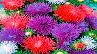 ▬► Flores hechas de papel. Parte 1. - YouTube