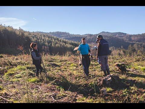 Verdeval repobla, co proxecto de custodia do territorio, o monte Matalagartos en Peitieiros
