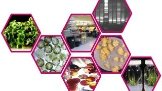 Plant biotechnology 6