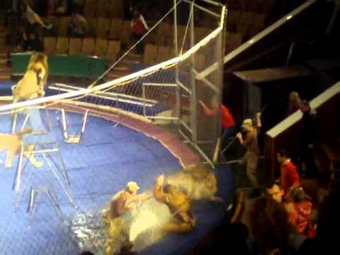 Lion Attack LionsTrainers at L'viv Circus Ukraine while kids run for lives