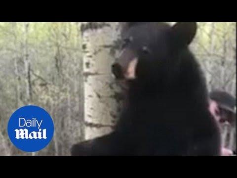 Αναπάντεχη «συνάντηση» κυνηγού με αρκούδα πάνω σε δέντρο!
