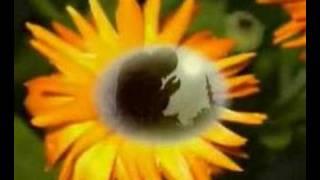 Müziksiz Ilahiler 23 - Allah Allah Allahu (celle Celaluhu)