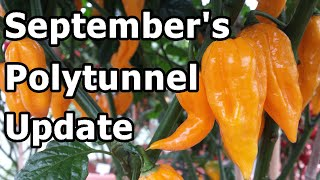 September Poly Tunnel Update