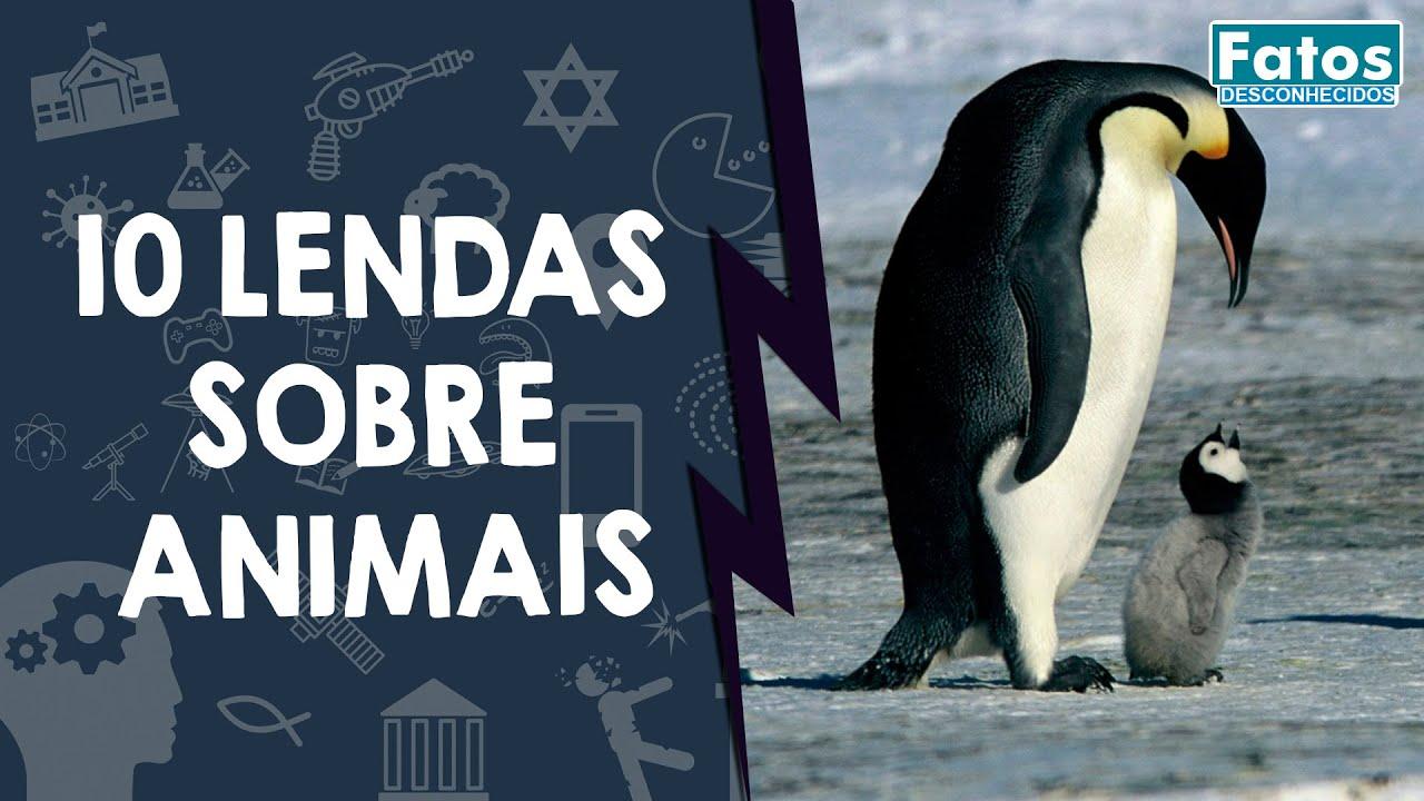 10 lendas sobre animais que você acredita até hoje