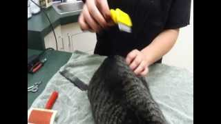 Pet Tips - Grooming Your Cat