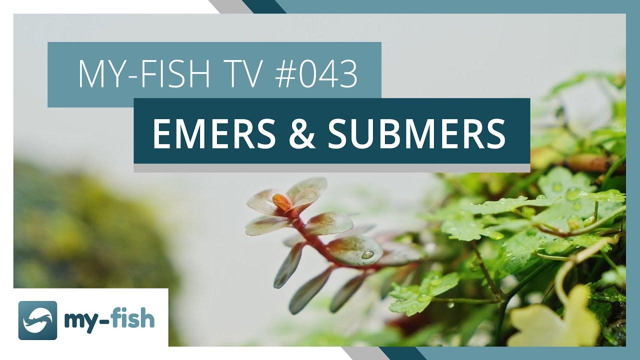 my-fish TV - Deine Nr. 1 Anlaufstelle für alle Themen rund um die Aquaristik 21
