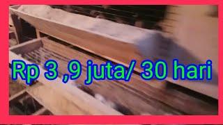 Video #Ternak Puyuh 1000 ekor ( Analisa Usaha) MP3, 3GP, MP4, WEBM, AVI, FLV Mei 2019