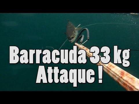 attaccato da un barracuda di 33 kg: pesca sub estrema!