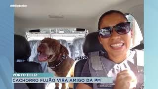 Porto Feliz: cachorro ganha casa em quartel da PM