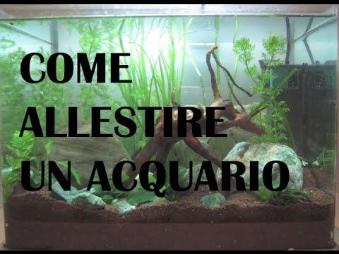 come preparare un acquario tropicale
