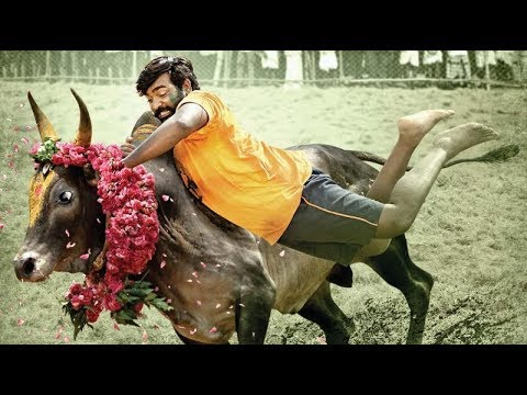 Video Karuppan - Official Tamil Teaser | Vijay Sethupathi | D. Imman download in MP3, 3GP, MP4, WEBM, AVI, FLV January 2017