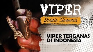 Video ULAR VIPER TERGANAS DI INDONESIA MP3, 3GP, MP4, WEBM, AVI, FLV Januari 2019