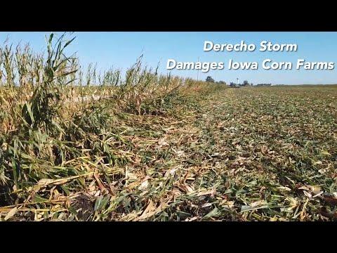 Derecho Storm Damages Iowa Corn Farms