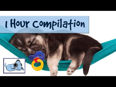 1 Hour Compilation! Music for Dogs  개를위한 �악 Música Para Perros - Improve Separation Anxiety
