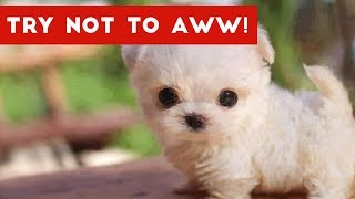 Video Try Not to AWW! at These Cute and Funny Animals | Funny Pet Videos MP3, 3GP, MP4, WEBM, AVI, FLV Februari 2018