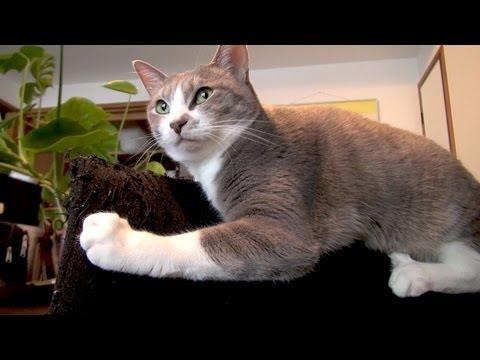 「[ネコ]椅子の背もたれに気持ちよさそうに乗っかる猫ちゃん。」のイメージ