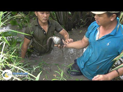 Lần Đầu Bắt Được Cá Mang Bầu Sắp Đẻ Con | Hội Ngộ Miền Tây - Tập 67 - Thời lượng: 37 phút.