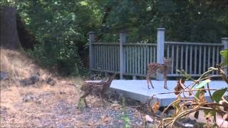 A deer family in my garden
