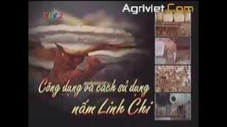 http://samnamlinhchi.tk/ CÔNG DỤNG: Nấm linh chi bổ dưỡng, chống lão hoá, chống ung thư, chống nhược cơ, chống tác hại của các tia xạ (vì vậy người chữa ung ...
