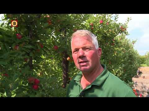 Joel Roks zoekt plukkers om zijn appels en peren te komen plukken