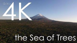 絶景 雪の富士山と青木ヶ原樹海 [4K]