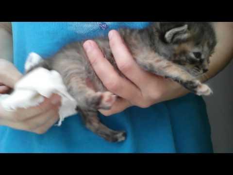 У котёнка запор как помочь в домашних условиях