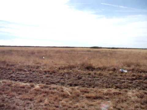 20 acres Quanah, TX