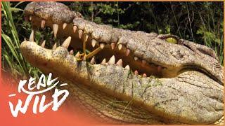 Nonton Animal Kingdom - Crocodiles & Elephants [Documentary Series] | Wild Things Film Subtitle Indonesia Streaming Movie Download