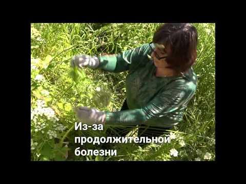 """Волонтеры """"Доброго дела"""" скосили траву на участке у Натальи Царевой"""