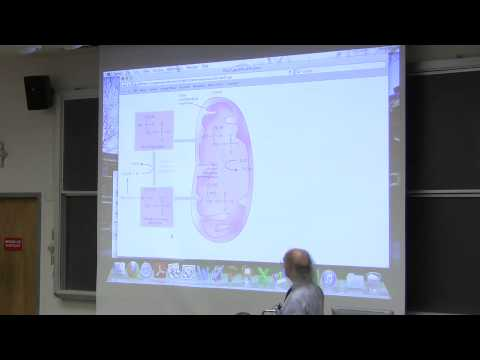 #31 Biochemistry Lecture (Lipid/Fat Metabolism I) from Kevin Ahern's BB 350