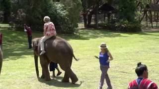 Nonton Miss Colombia   El Salvador Riding Elephants    Thai Elephant Kingdom    Chiang Mai  Thailand  2016  Film Subtitle Indonesia Streaming Movie Download