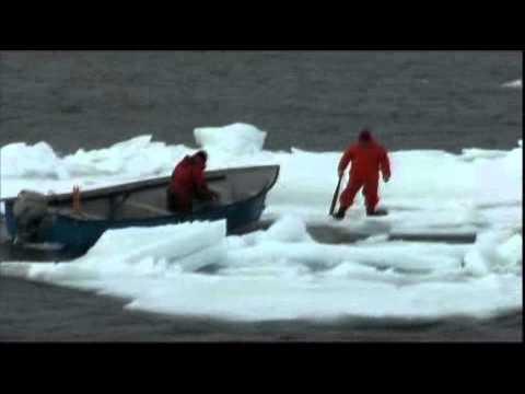 Coast Guard Rams Farley Mowat