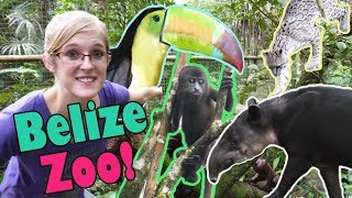Touring the Belize Zoo! by Snake Discovery