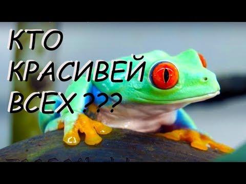 Топ 10 - самые красивые лягушки