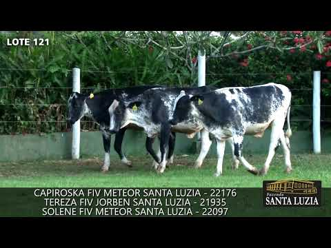 LOTE121