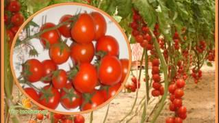 Nos Variétés de semences