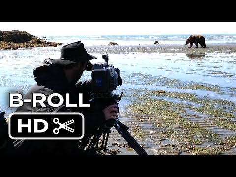 Bears B-Roll 'Katmai'