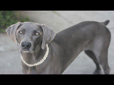 25 Smartest Dog Breeds Ever (видео)