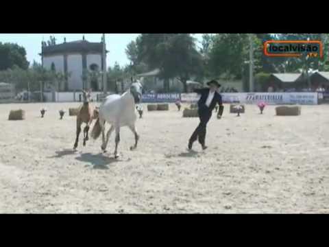 Reportagem da 'LocalVisãoTV' sobre a IV Feira do Cavalo de Ponte de Lima
