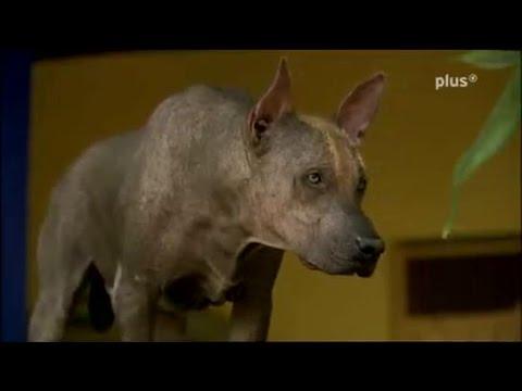 Hunde: Wie Hunde die Welt verändern ( DOKU )