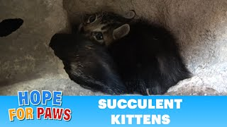 It's unreal how many kittens squeezed INTO a rock! by Hope For Paws